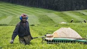 2012-Voedselzekerheid