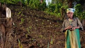 2012-ontbossing en de oplossing
