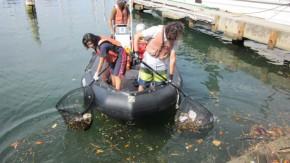 1441976273_volunteering_coastal_cleanup